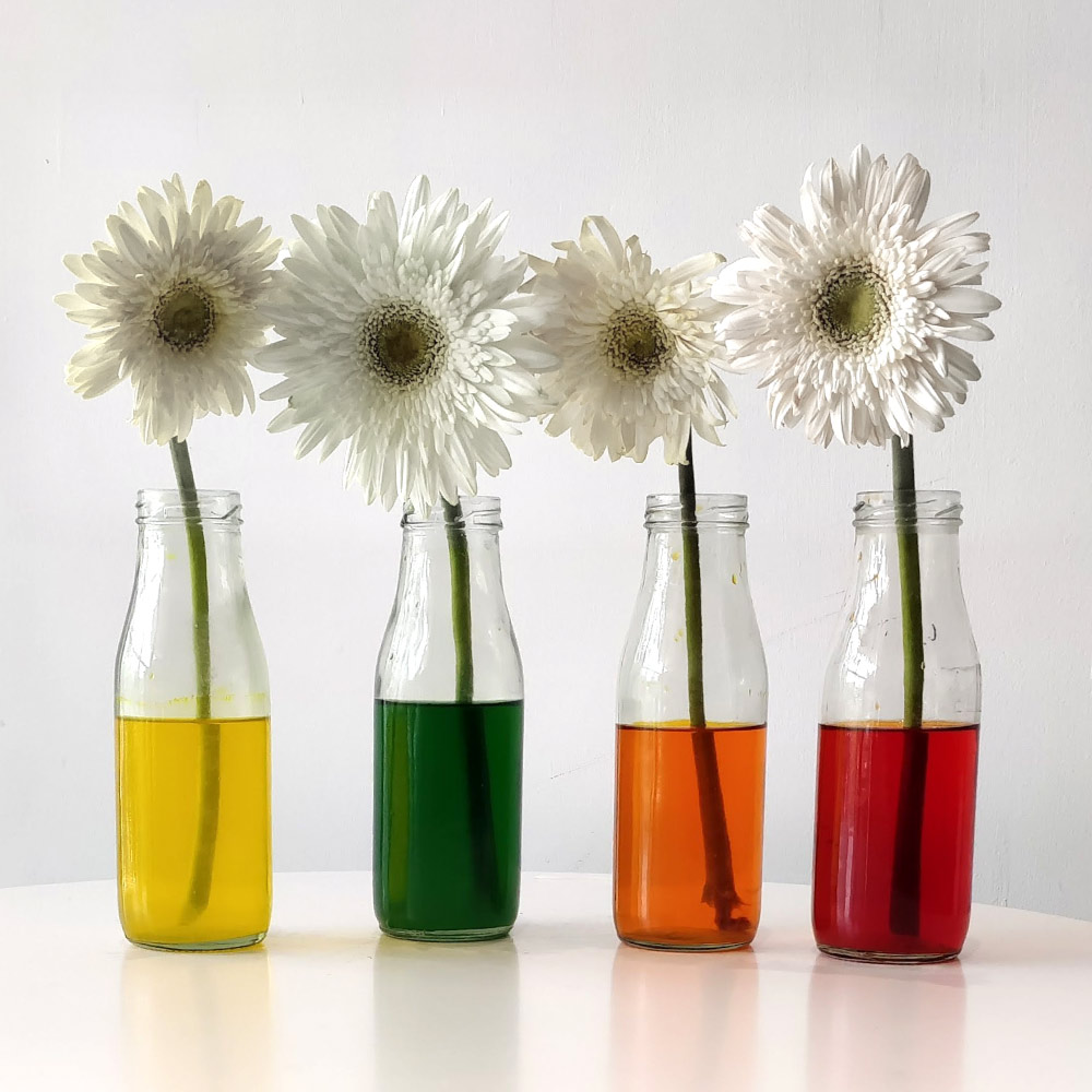 DIY-Flower-colour-changing-activity-before