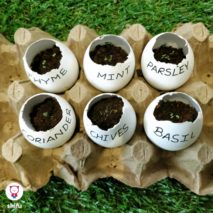 DIY eggshell garden herbs and seeds activity