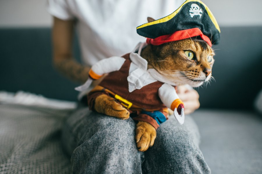 Lovely kitten in pirate costume. Funny cat in the mask.